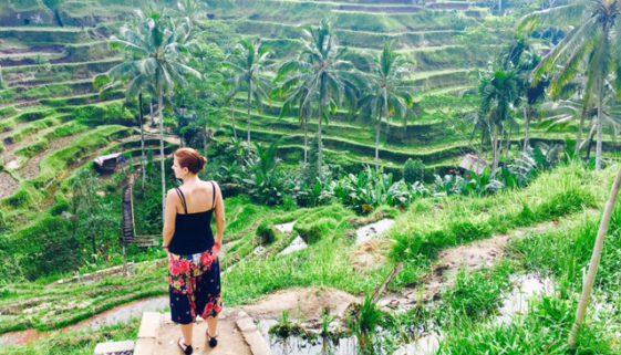Bali Indonesien Reisterrassen
