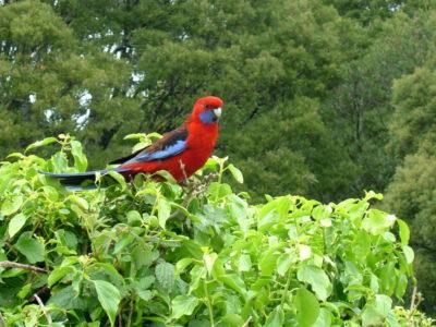 MSWellTravel_Australien Vogel